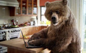 Bear Hacker