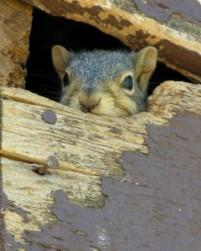squirrel-240x300